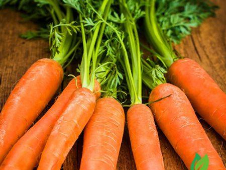 Hạt giống cà rốt New Kuroda
