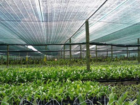 Lưới che nắng vườn rau