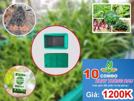 Combo 10 khay trồng rau