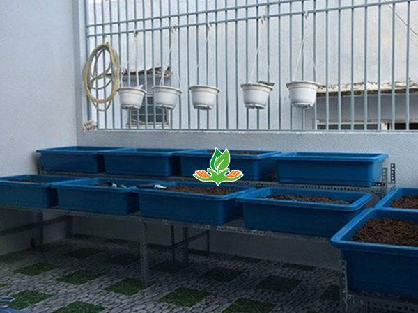 Bộ kệ trồng rau bậc thang 2 tầng 8 khay không giàn leo