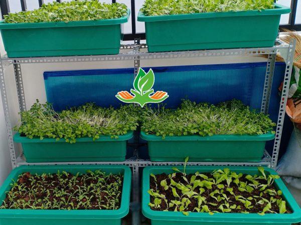Bộ kệ trồng rau chữ L 3 tầng 6 khay không giàn leo