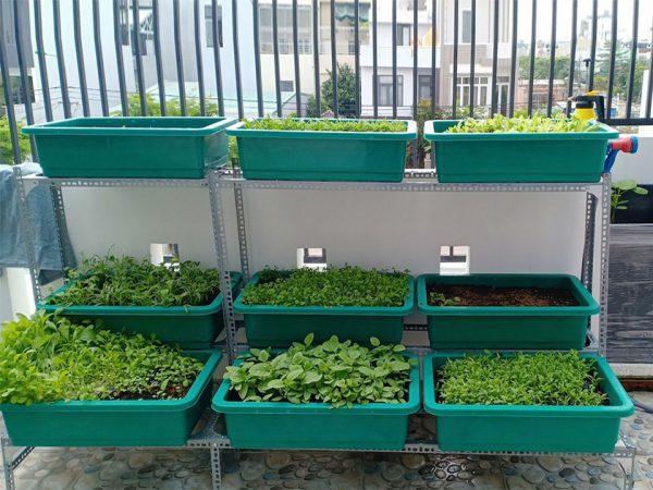 Bộ kệ trồng rau chữ L 3 tầng 9 khay không giàn leo